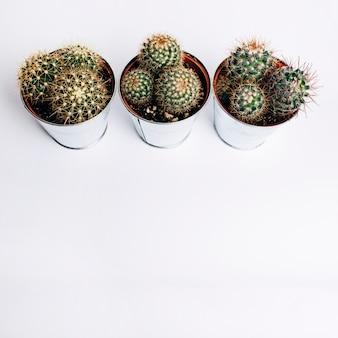 흰색 배경에 알루미늄 선인장 식물의 오버 헤드보기