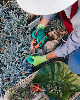 バスケットの花を収穫する男性庭師の俯瞰