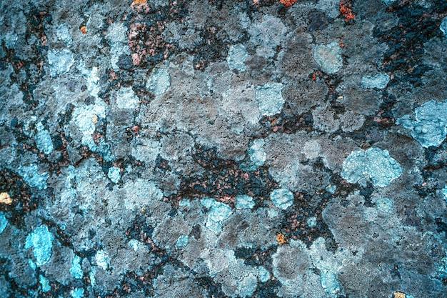 苔のテクスチャの背景を持つ灰色の石の壁にマルチカラーのカビの珍しいパターン