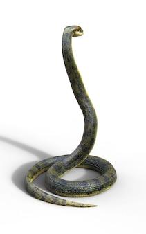 Anaconda, boa constrictor the world's biggest venomous snake isolated on white background