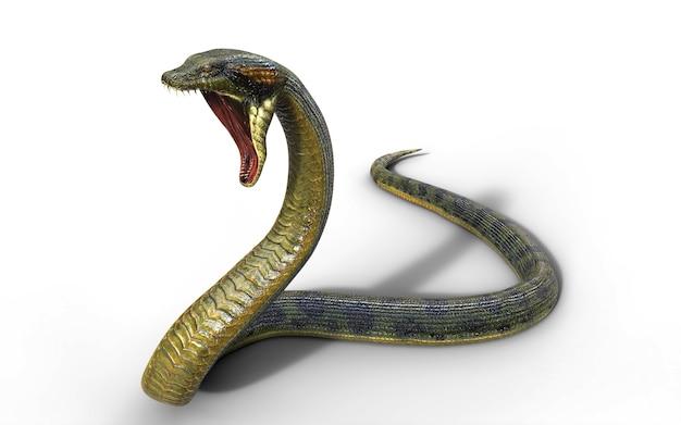 Anaconda, boa constrictor the world's biggest venomous snake