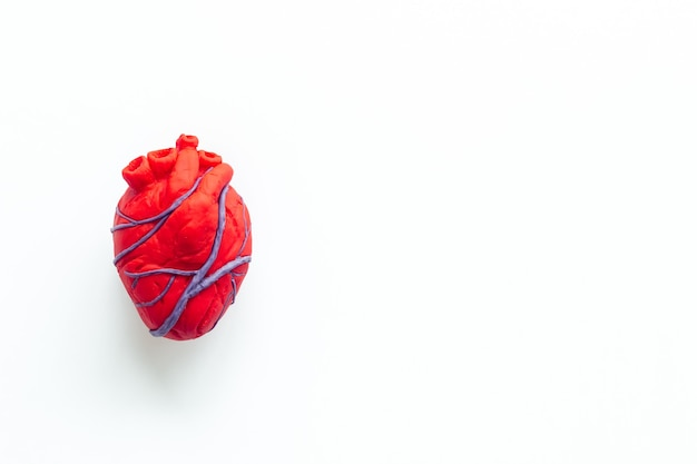 Anatomical heart made of plasticine on white
