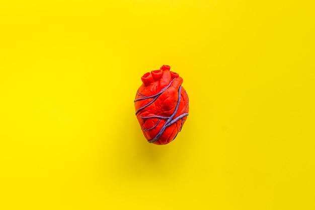 黄色の解剖学的心臓