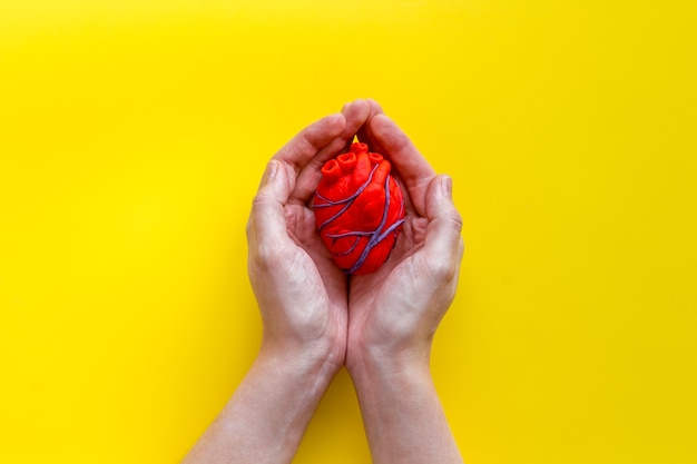 Anatomical heart on yellow