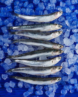 Anchovies fresh fishes on ice