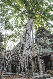 Древние руины ангкор-ват панорама.