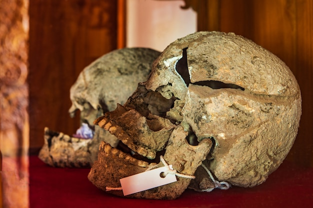Ancient human skeletons found in thailand.