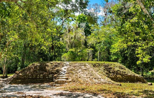 Ancient mayan ruins at tikal. unesco world heritage in guatemala