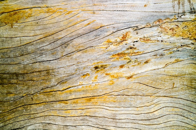 Ancient old hard wood surface was crack by sunlight rain