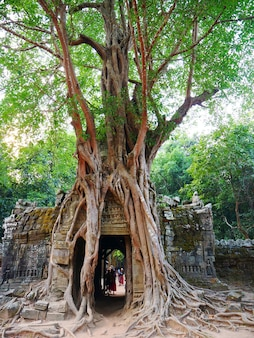 Ancient ruins of ta som temple in angkor wat complex, siem reap cambodia. stone temple door gate ruin with jungle tree aerial roots.