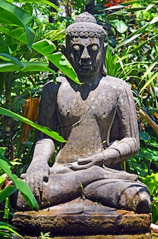 An ancient statue of an abandoned buddha in the thickets of the equatorial jungle.