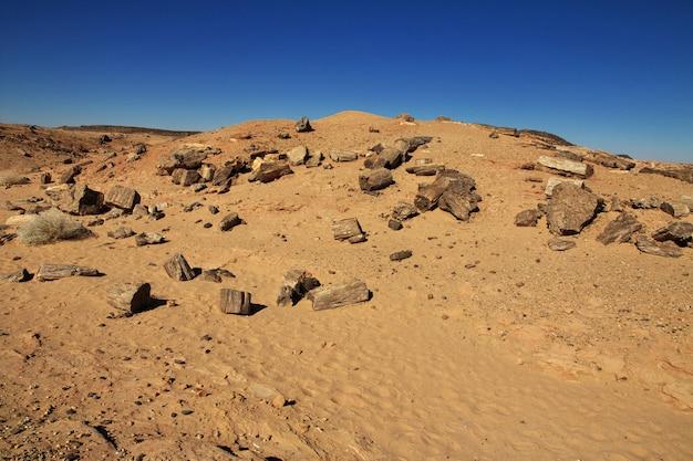 スーダン、サハラ砂漠の古代の木々