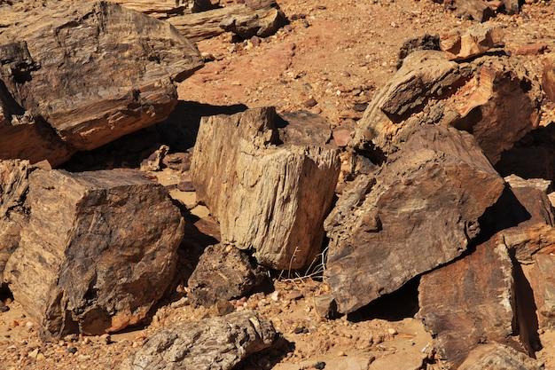 スーダンのサハラ砂漠の古代の木々