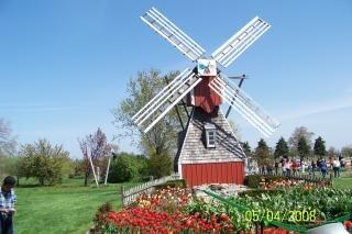 Ancient windmill, tree