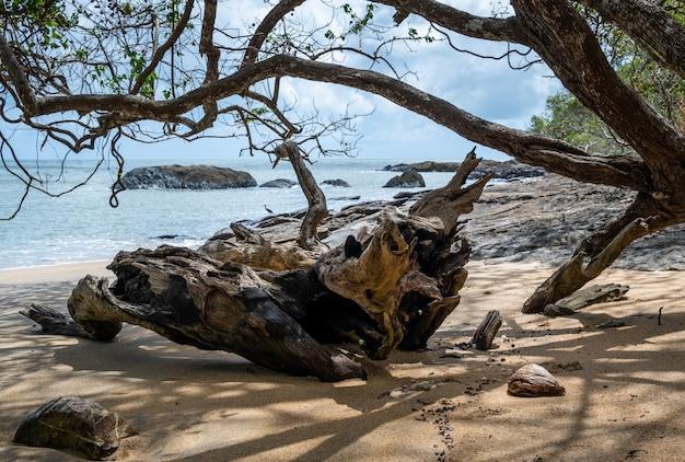 호주 케언즈 케이프 트리뷸레이션(cairns cape tribulation australia)의 바다 근처 해변에 있는 나무 가지