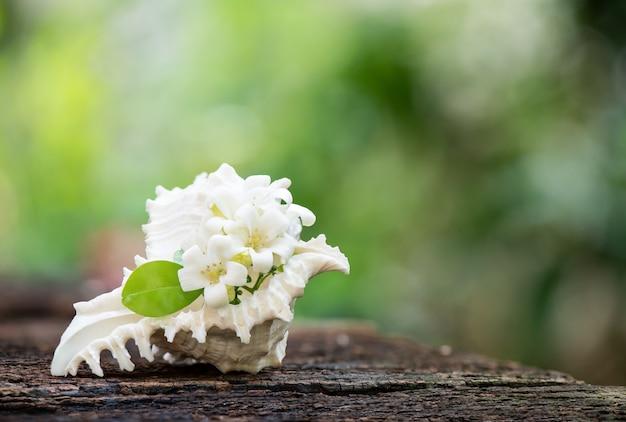 Андаманское атласное дерево или цветы муррая метельчатая на поверхности природы.