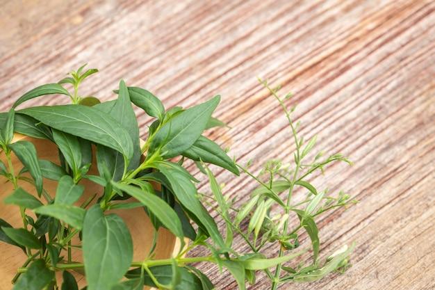 緑のandrographis paniculataまたは木製のテーブルに緑のチレタ。