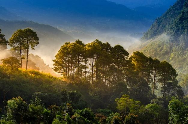 森の朝は霧の海ang khang chiang mai thailandを持っています