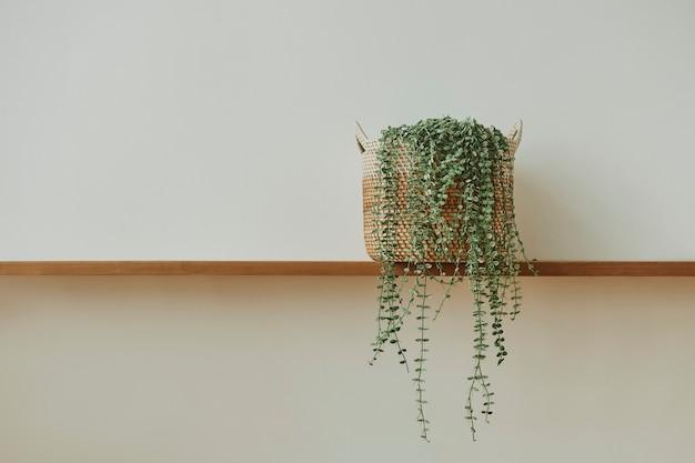 나무 선반에 엔젤 덩굴 식물