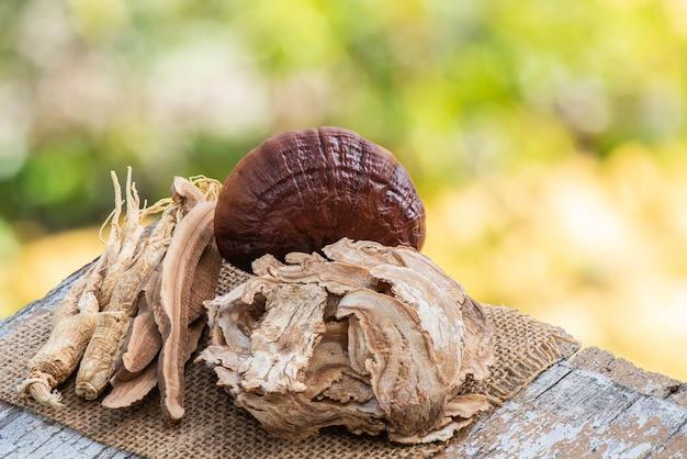안젤리카 sinensis, 인삼 및 영지 또는 lingzhi 버섯 bokeh 자연 배경.