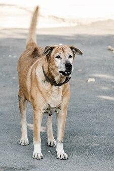 怒っている攻撃的な危険な犬は家で保護するために歯を示しています