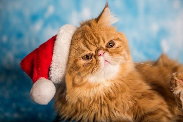 Злой кот в красной шапке санта-клауса на рождество