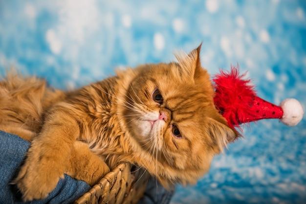 Злой красный персидский кот в красной шапке санта-клауса на синем новогоднем фоне со снегом