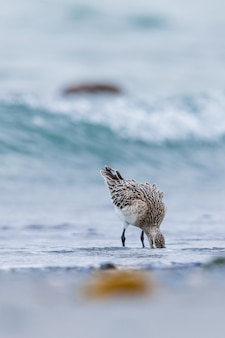 Animal bird in the beach