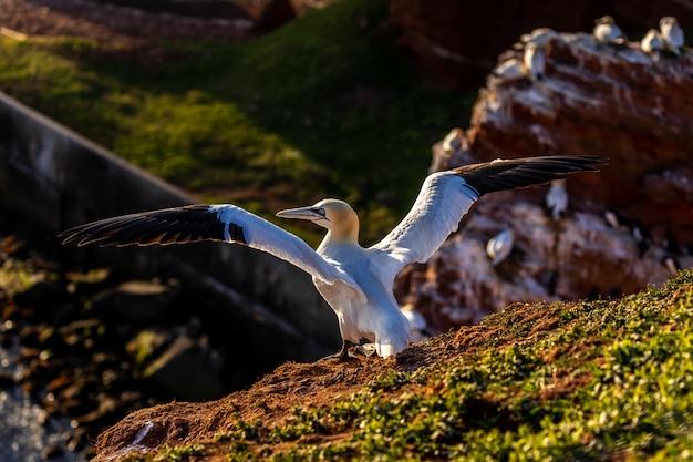 Animal bird flying