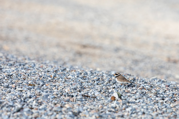 Animal bird sparrow and road