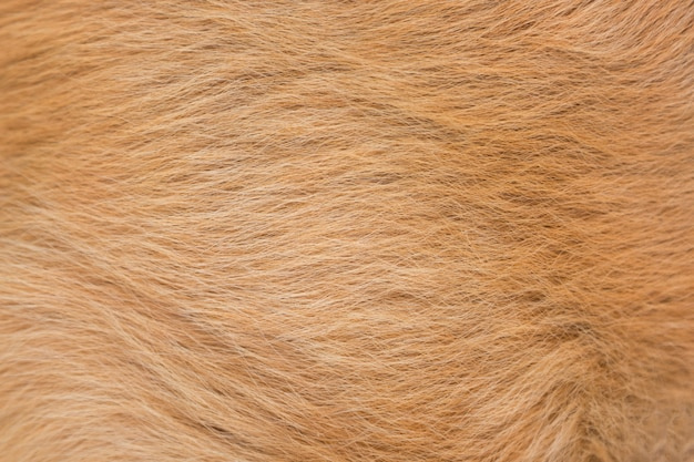 Animal dog fur .