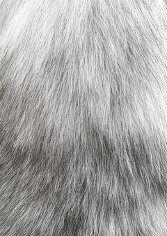 動物のふわふわの毛皮の背景