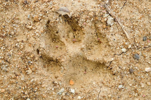 Animal footprints on abstract background rift of soil climate change and drought land.