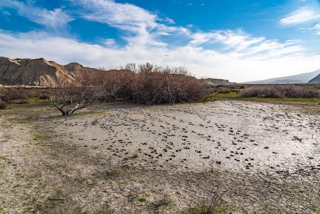 乾燥した池の動物の足跡