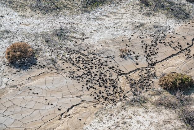 乾燥した水たまりの動物の足跡