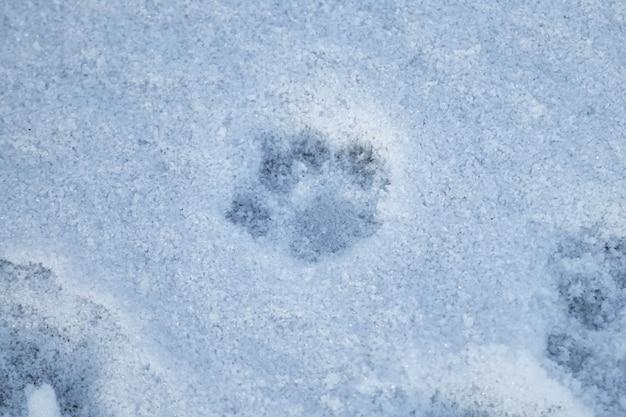 Следы животных на белом снегу, вид сверху.