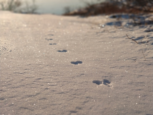 Animal footprints in the snow in the sun