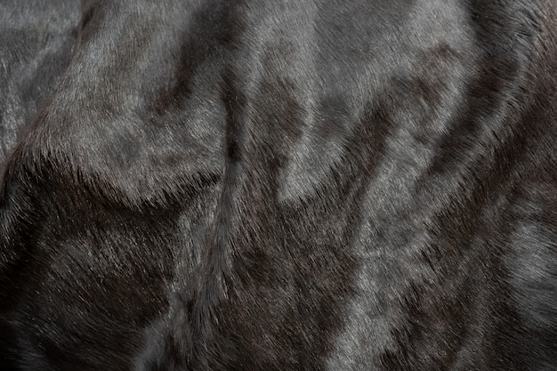Animal hair of fur cow leather texture background. natural fluffy black cowhide skin.