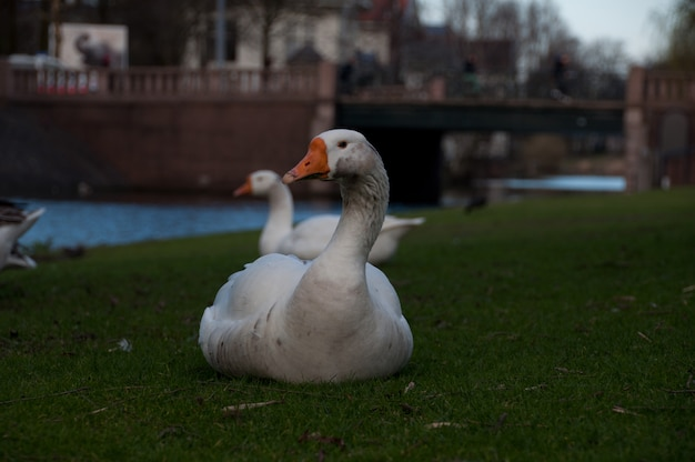 Animal life in amsterdam, netherlands