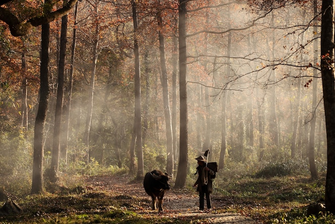 Animal and man walking in the forest