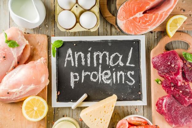 Животные источники белка, мясо, яйца, морепродукты, молочные продукты