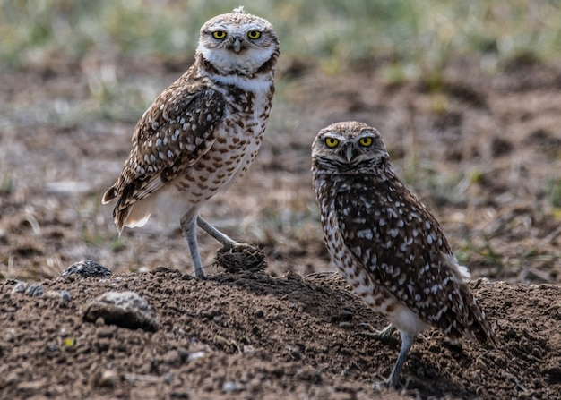 動物のセレクティブフォーカス、被写体にセレクティブフォーカス、背景ぼかし、時間の間に自然の素晴らしい素晴らしい新しい美しく写真