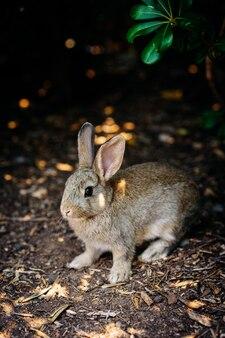 시간 자연 멋진 좋은 새로운 아름답게 동물 선택적 초점, 주제, 배경 흐림에 선택적 초점 photo