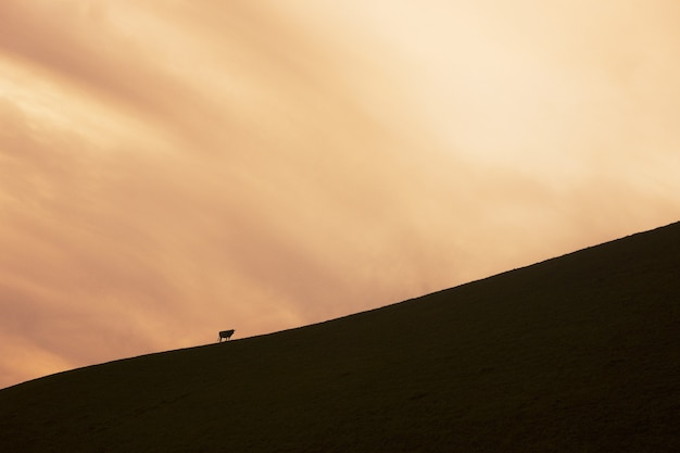 夕焼け空と丘の上の動物のシルエット