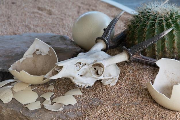 Animal skull and ostrich egg in desert