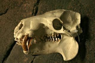 Animal skull in a photo