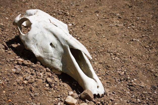 動物の頭蓋骨