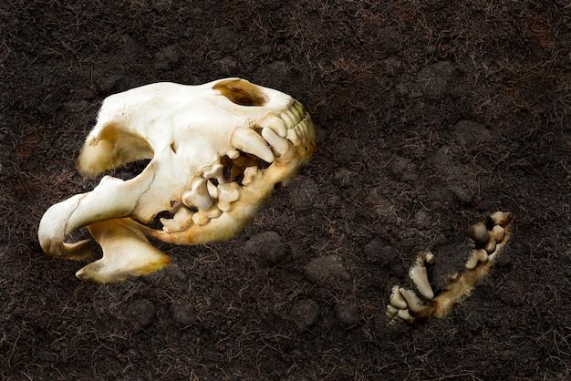 동물 두개골