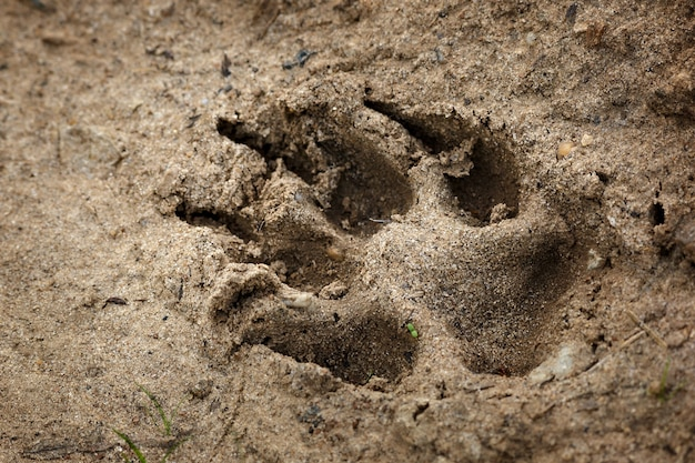Animal traces on the earth