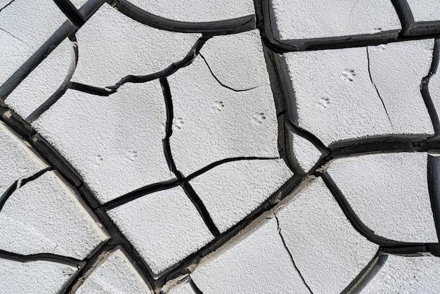 Animal tracks on cracked ground